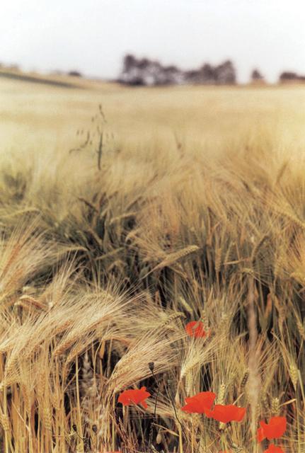 Ralph Gibson, 'Wheat Field, Burgundy', 1993, Aperture Foundation