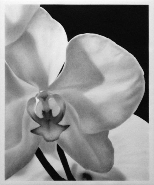 , 'Orchids III,' 2017, Mazel Galerie