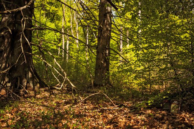 , 'Vida nos Bosques /Life in the Woods,' 2013, Silvia Cintra + Box 4