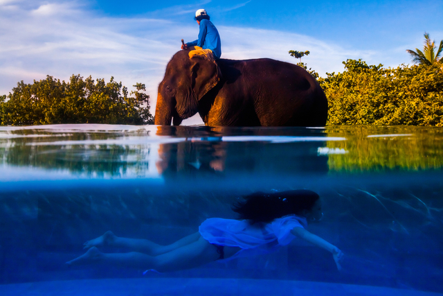 Justin Mott, 'Cultural Bliss, A model swims underwater past an elephant and a mahout at a private home in Phuket, Thailand', 2011, Anastasia Photo