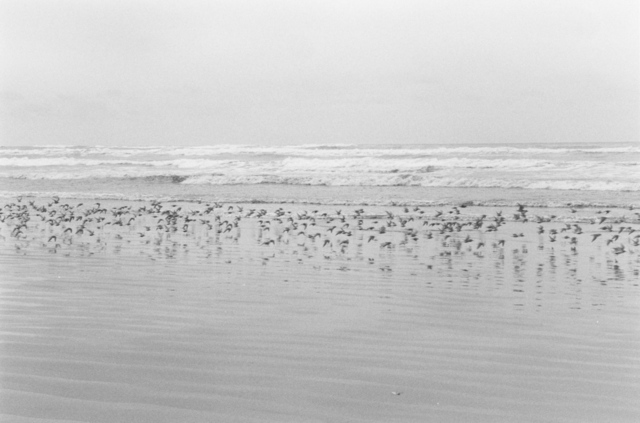 , 'North Beach Peninsula, Pacific County, Washington,' 2008, Fraenkel Gallery