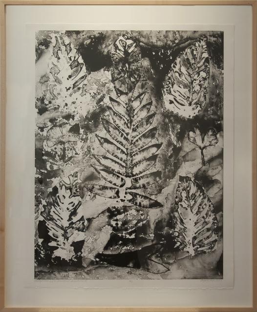 , 'Motifs From ISU Greenhouse (Selection III),' , Main Street Arts