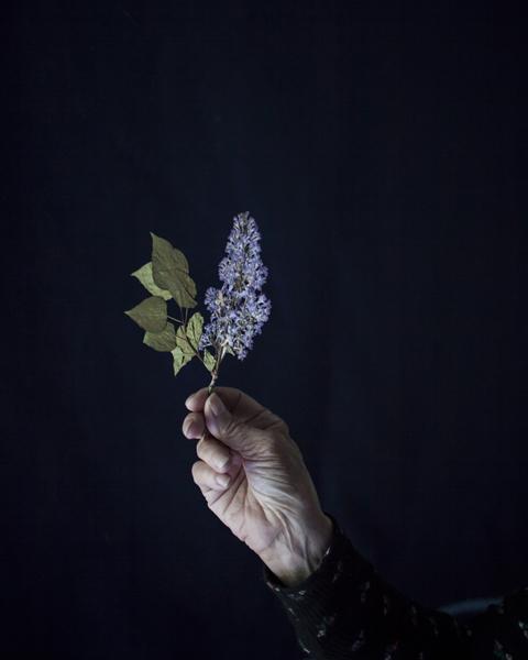Cig Harvey, 'Mum Holding Pressed Lilacs, Rockport, Maine', 2018, Robert Mann Gallery