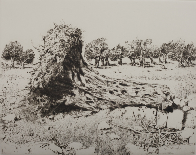 , 'Ancient olive trunk,' 1985, Gallery One