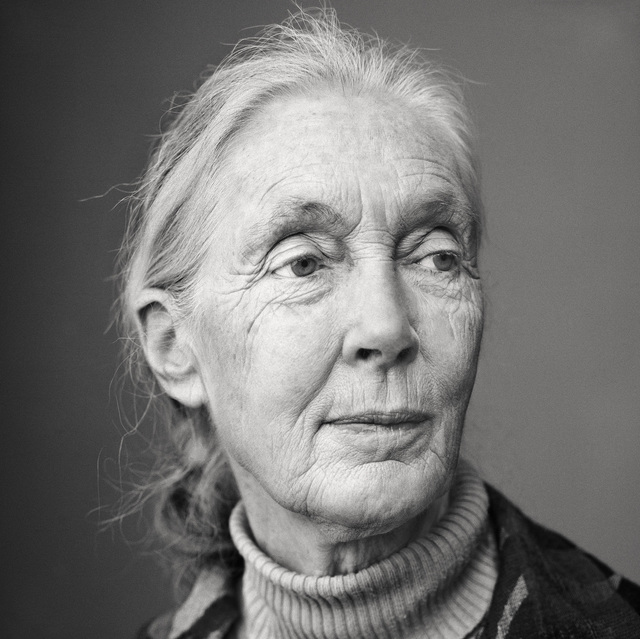 Martin Schoeller, 'Jane Goodall', 2010, Photography, Archival Pigment Print, CAMERA WORK