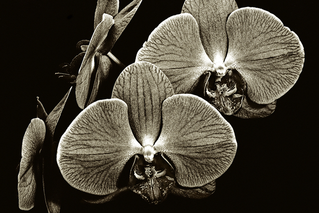 , 'Floating Orchids,' , Soho Photo Gallery