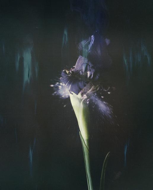 , 'Iris atropurpurea P05,' 2018, Talley Dunn Gallery