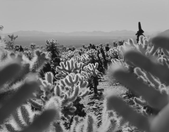 , 'Joshua Tree, California,' 2011, Edwynn Houk Gallery