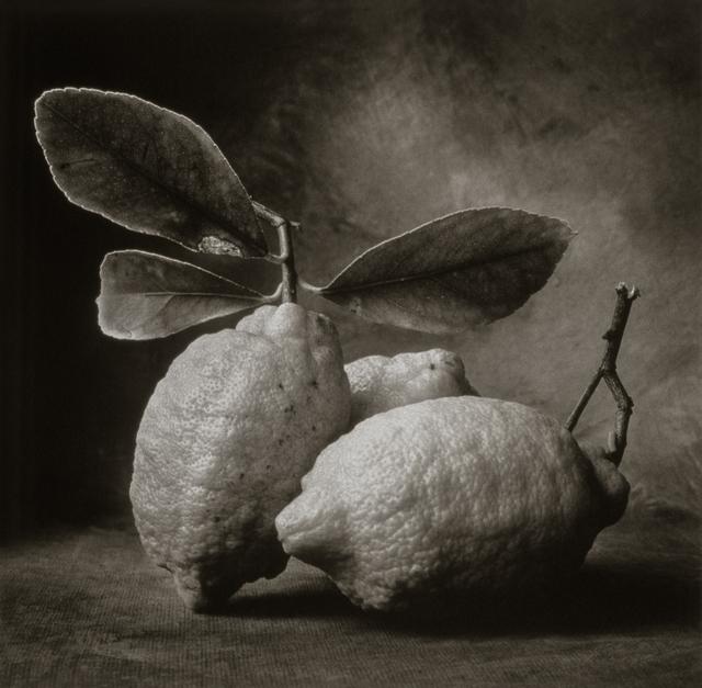 , 'Tuscan Lemons,' , Gallery 270