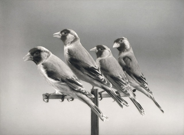, 'Four Birds,' 2015, Niels Borch Jensen Gallery and Editions