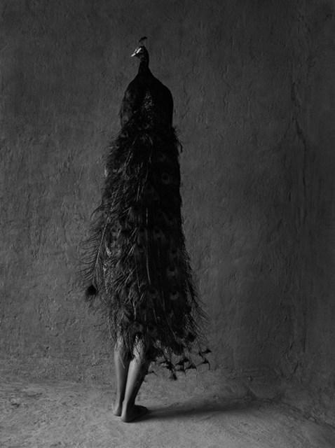 , 'La Pavorreal,' 1999, Patricia Conde Galería