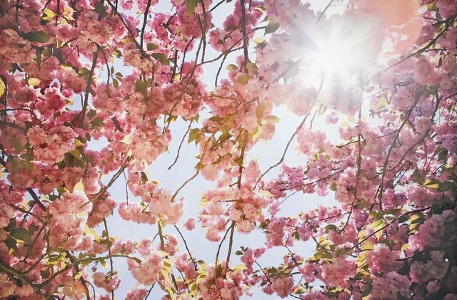 Susan Wides, 'Cherry Blossom1', 2002, Madelyn Jordon Fine Art