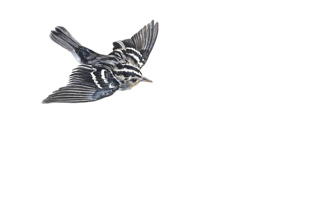 , 'Black and White Warbler,' 2014, Jason McCoy Gallery