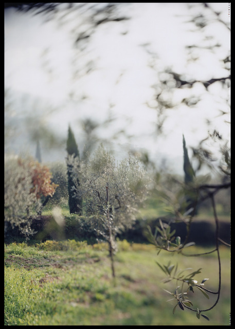 Joann Verburg, 'Campello Olive Trees for Giulio', 2003, G. Gibson Gallery