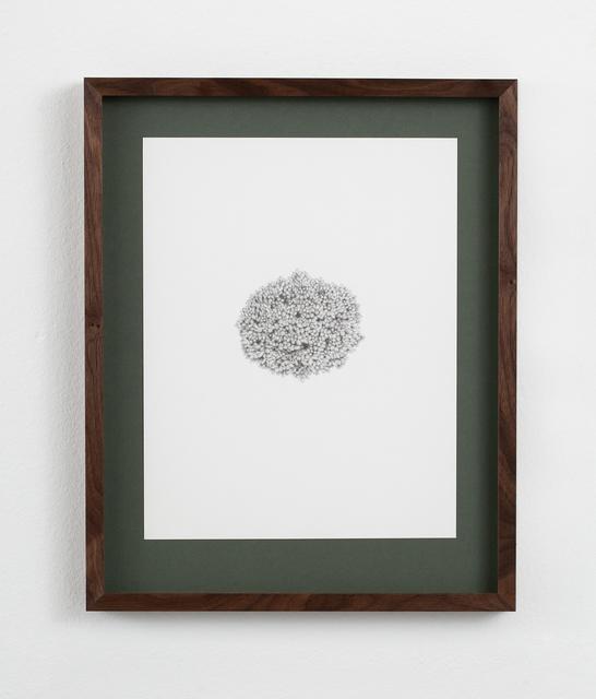 , 'Picea abies 'Mariae-Orffae',' 2016, Galerie Nordenhake