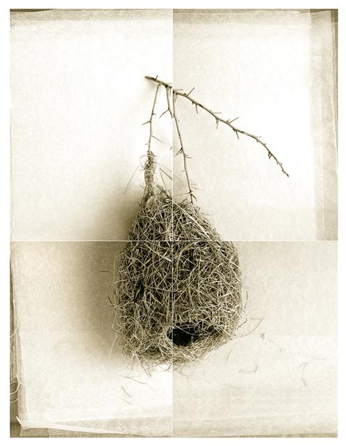 Laurie Rubin, 'Round Weaver Bird Nest', Chicago Art Source