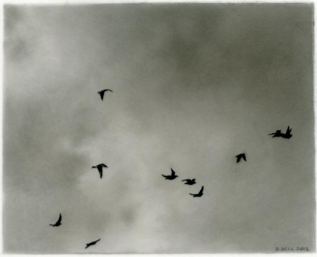 Dozier Bell, 'Flock, 6', 2012, DANESE/COREY