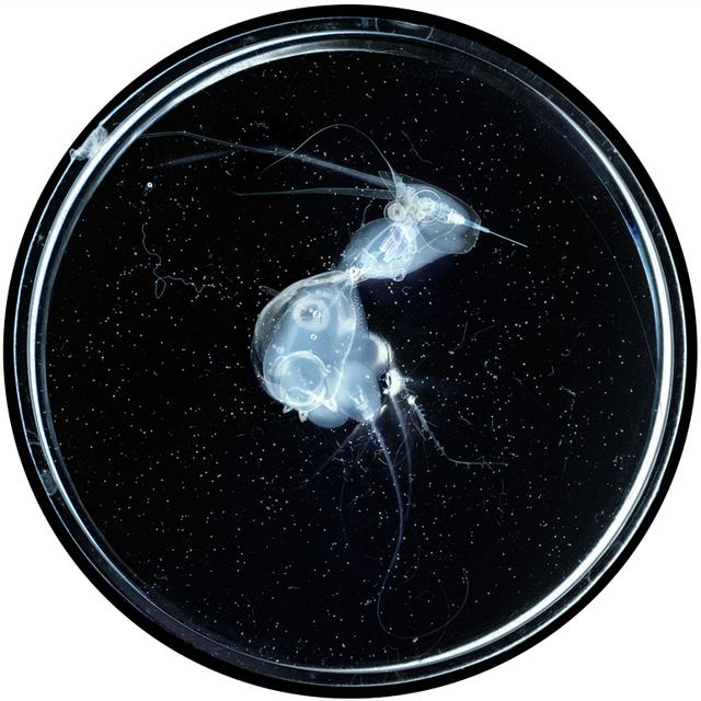 Laurent Lamarche, 'Embryon 1', 2010, Art Mûr