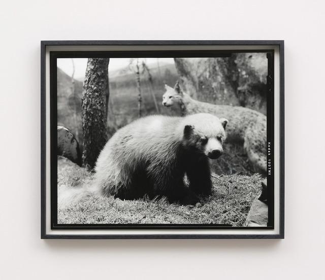 Gerard Byrne (b. 1969), 'Sixteenth beast', 2018, Photography, Analogue silver gelatin print, Kerlin Gallery