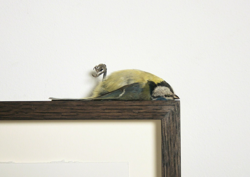 Polly Morgan - Blue Tit, 2012 (detail). Photo courtesy of the artist.