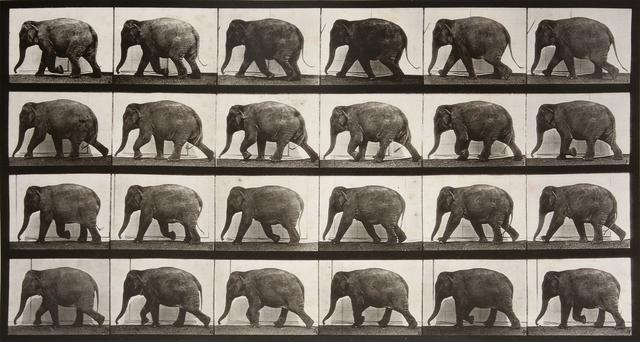 , 'Animal Locomotion: Plate 733 (Elephant Walking),' 1887, Huxley-Parlour