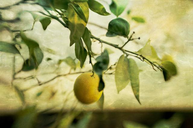 , 'Lemon,' 2018, Panopticon Gallery