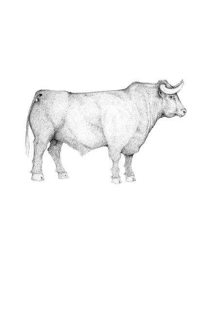 , 'A Whole Lotta Bull,' 2014, Rebecca Hossack Art Gallery