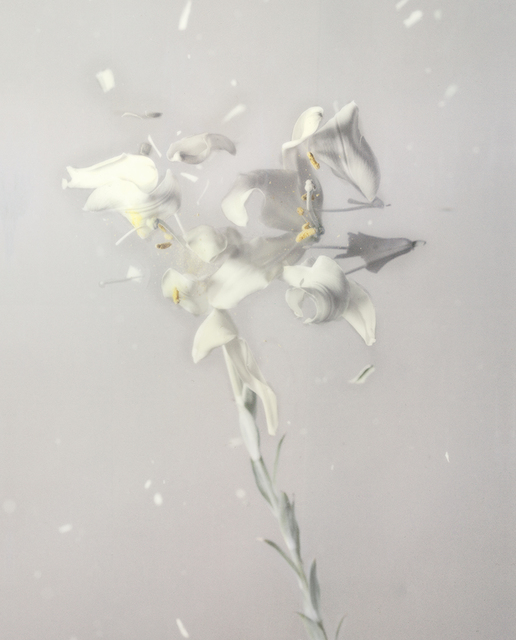 , 'Lilium Candidum 01P,' 2018, Yancey Richardson Gallery