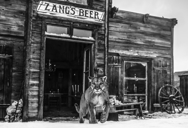 David Yarrow, 'Wild West', Visions West Contemporary