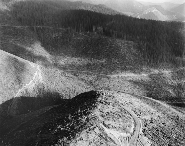 , 'Aerial view: Edge of eruption impact zone showing blown-down, standing dead and living tress. Salvage in progress. Approx. 14 miles NW of Mt. St. Helens, Wash., 1981,' 1981, Etherton Gallery