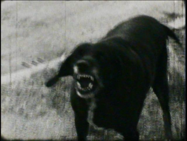 , 'I cani lenti,' 1971, P420