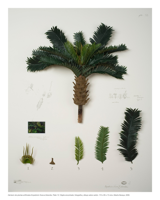 , 'Herbal of artificial plants. New Zealand Expedition,' 2009, Instituto de Visión