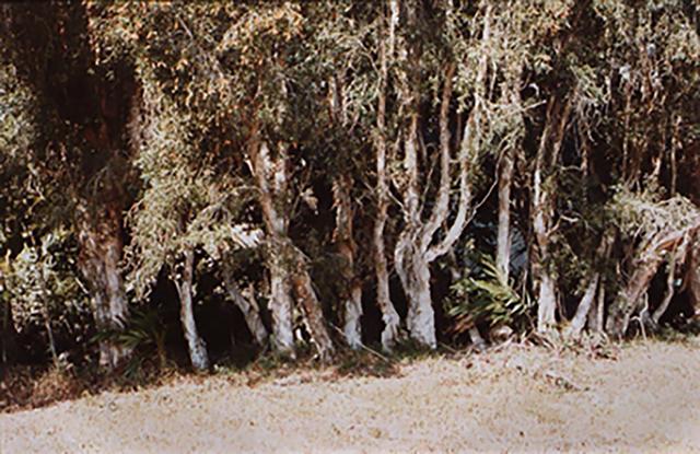 , 'Untitled (tree line in swamp),' ca. 1980, David Lusk Gallery