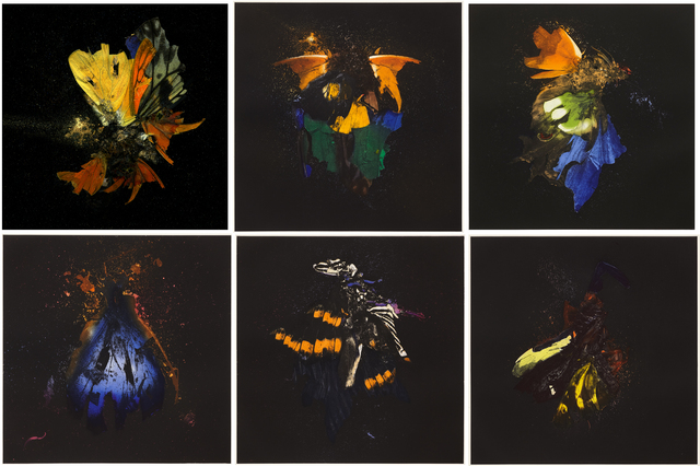 Mat Collishaw, 'Insecticide', 2010, Print, Photogravure etching on copper, Paupers Press