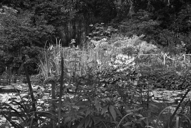 , 'Shadow and Light #5,' , Soho Photo Gallery