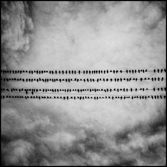 , 'Birds. Tulare, California.,' 2014, Magnum Photos