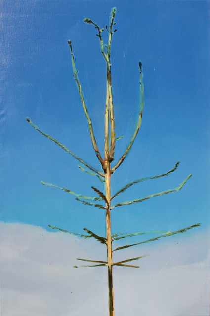 , 'Picea abies #4,' 2019, Whitehouse Gallery