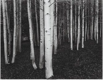 Ten Photographs of Nature