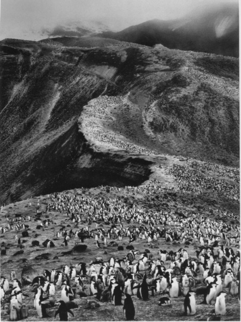 Sebastião Salgado, 'On Deception Island, Antarctic Peninsula', 2005, Yancey Richardson Gallery