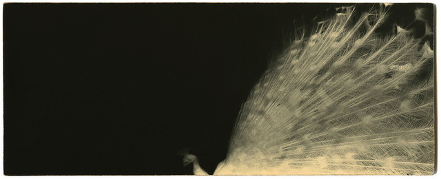 , 'BK0056,' 2011, Ira Stehmann Fine Art Photography