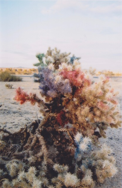 , 'Rainbow Cholla,' 2016, Open Mind Art Space