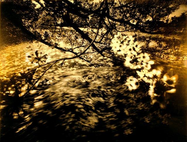 Aramasa Taku, 'ARAMASA SAKURA - in black box 2001 (Printed 2012),' 2012, Annely Juda Fine Art