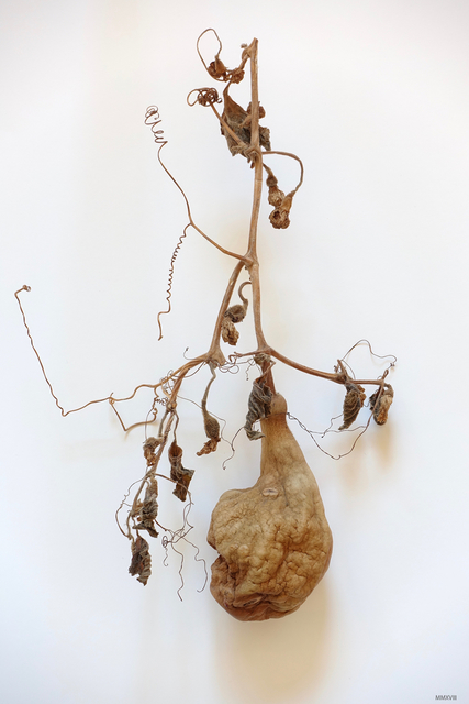 James Pitts, 'Dried Gourd', 2018, photo-eye Gallery