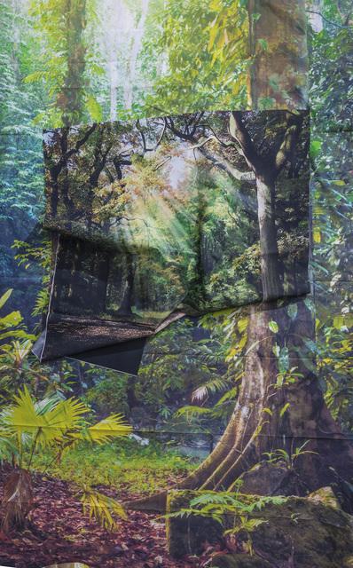 , 'Sunrays in Rainforest,' 2016, Erin Cluley Gallery