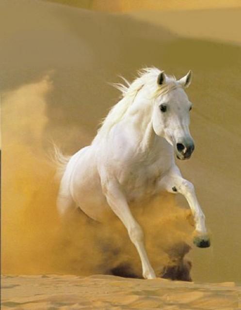 , 'Omani Horse,' 2013, Janet Rady Fine Art