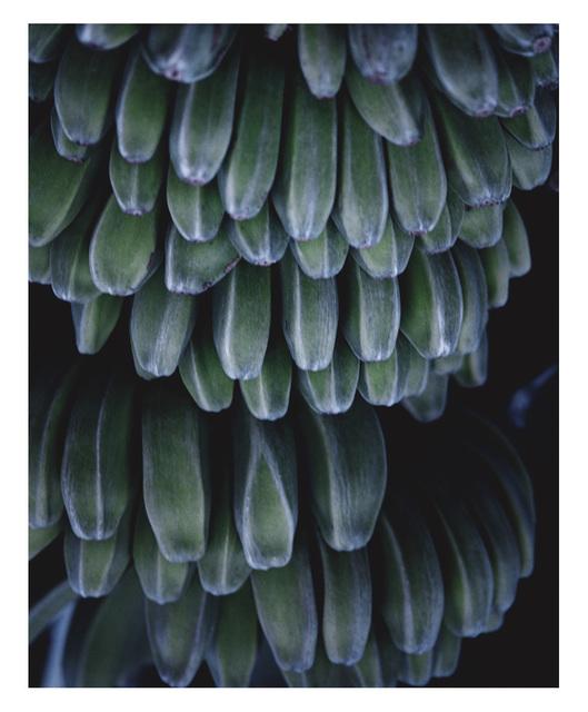 , 'Bananas,' 2006, ARC Fine Art LLC