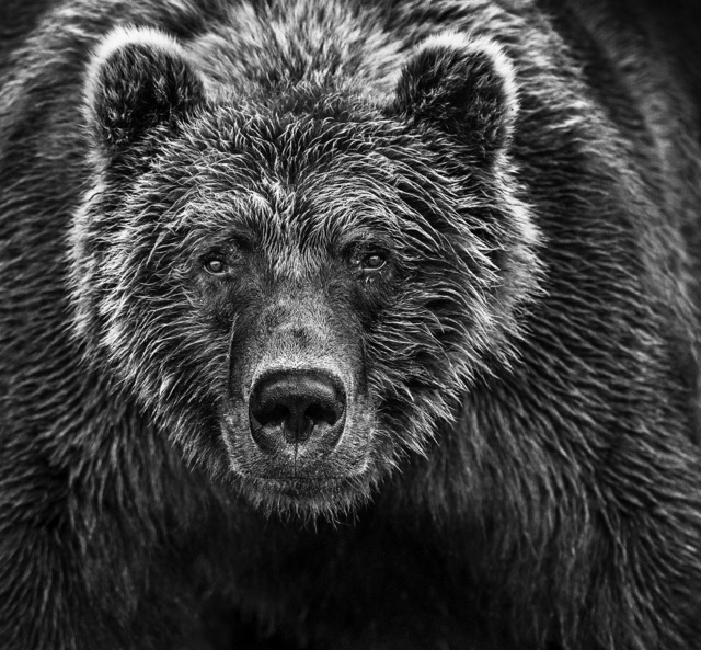 David Yarrow, 'Face Off', Visions West Contemporary