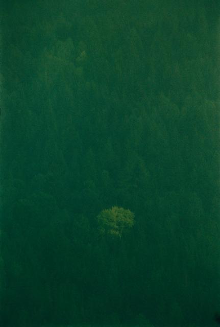 , 'Baum im Wald, Series: Apollo,' 2016, Corkin Gallery
