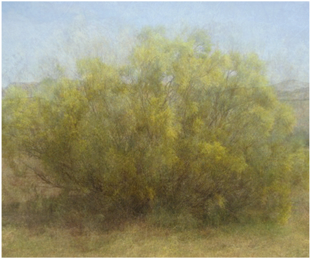 , 'Fourteen Years out of a Death Row Sentence (Dying Wish- Ratama Tree),' 2009-2016, Mark Moore Fine Art