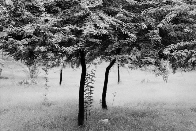 Raghu Rai, 'Untitled', Photoink